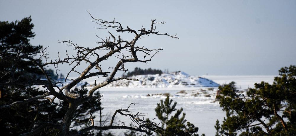 Porkkalanniemen talvinen maisema puiden latvojen yli.