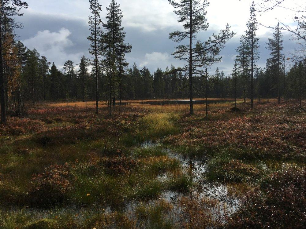 Soinen metsä.jpg