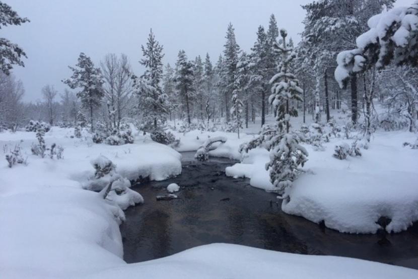 Luminen puro.jpg