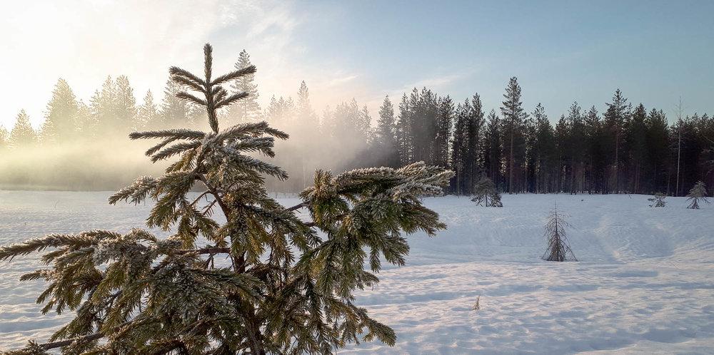 Sumuinen keväisen lumen peittämä suomaisema.