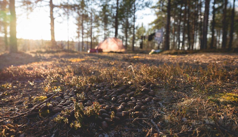 PaPaNat ovat merkki hyvästä leiripaikasta.