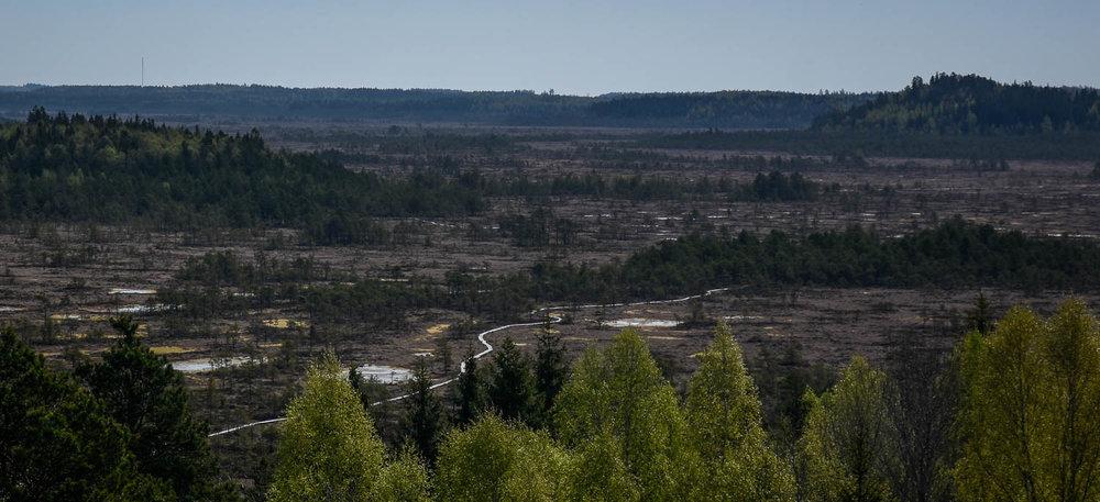 Torronsuon kansallispuiston maisemat lintutornista kuvattuna.