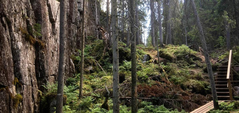 Pystysuora kallio puiden keskellä kuvaa rotkon maisemaa.