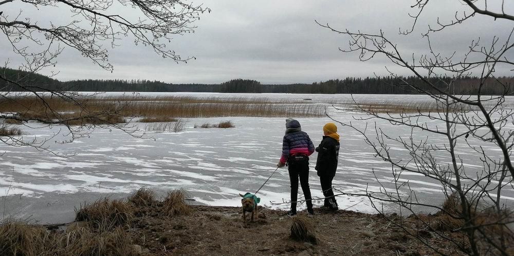 Joutsijärvi lumettomana.