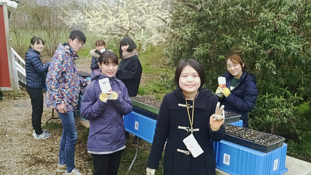 """Oregon Exploring"" students from Japan sowing peas for the plant sale"