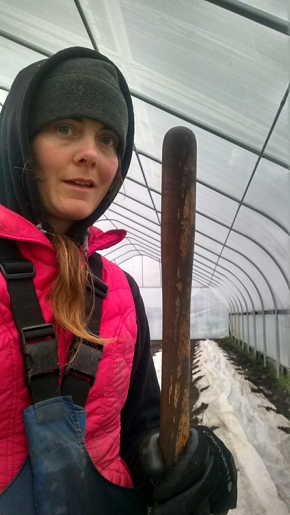 Row covering cucumbers in the high tunnel to keep us all warm