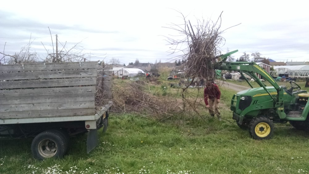 Loading branches with the tractor's pallet fork