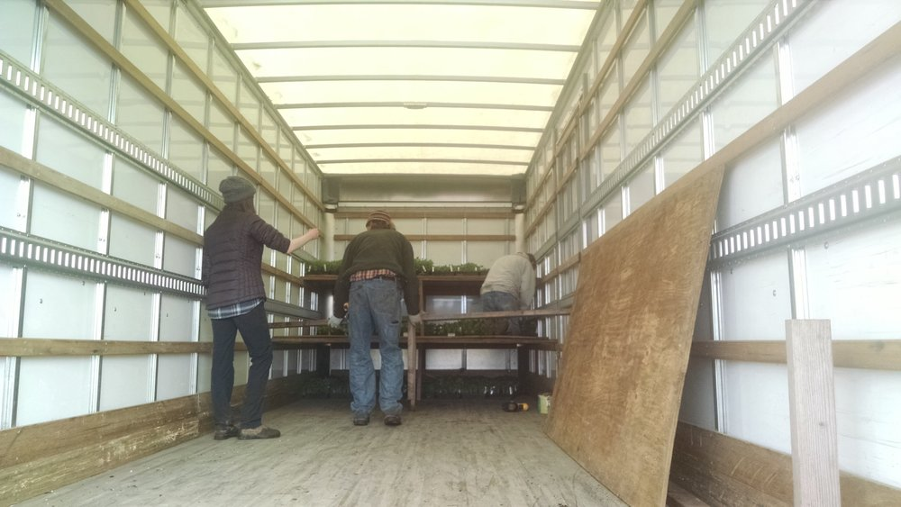 Building plant shelves in the truck
