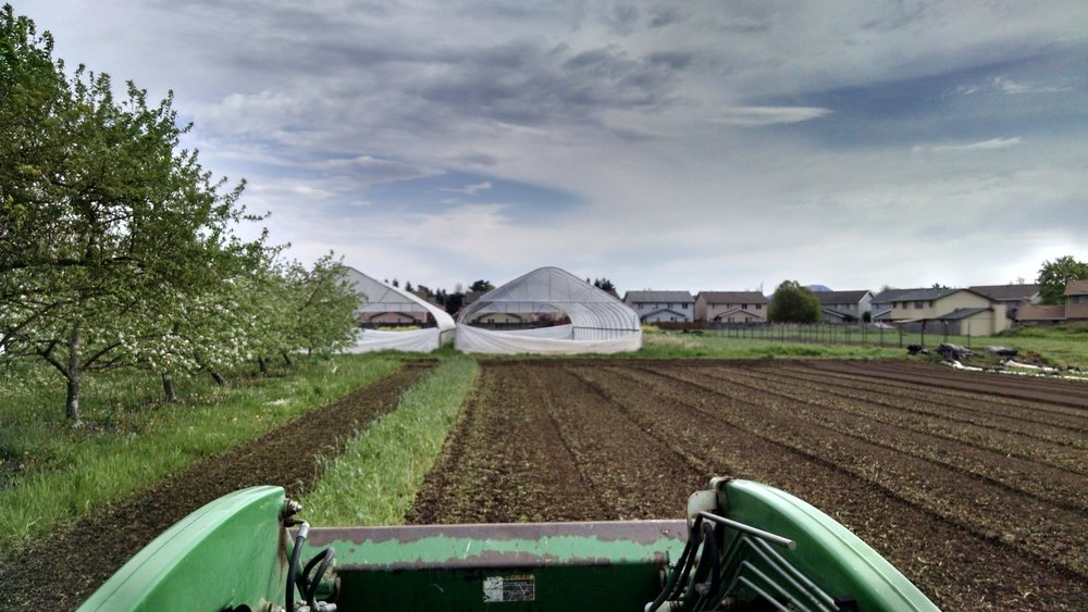 Tilling under cover crop, one more swath to go, clouds rolling in