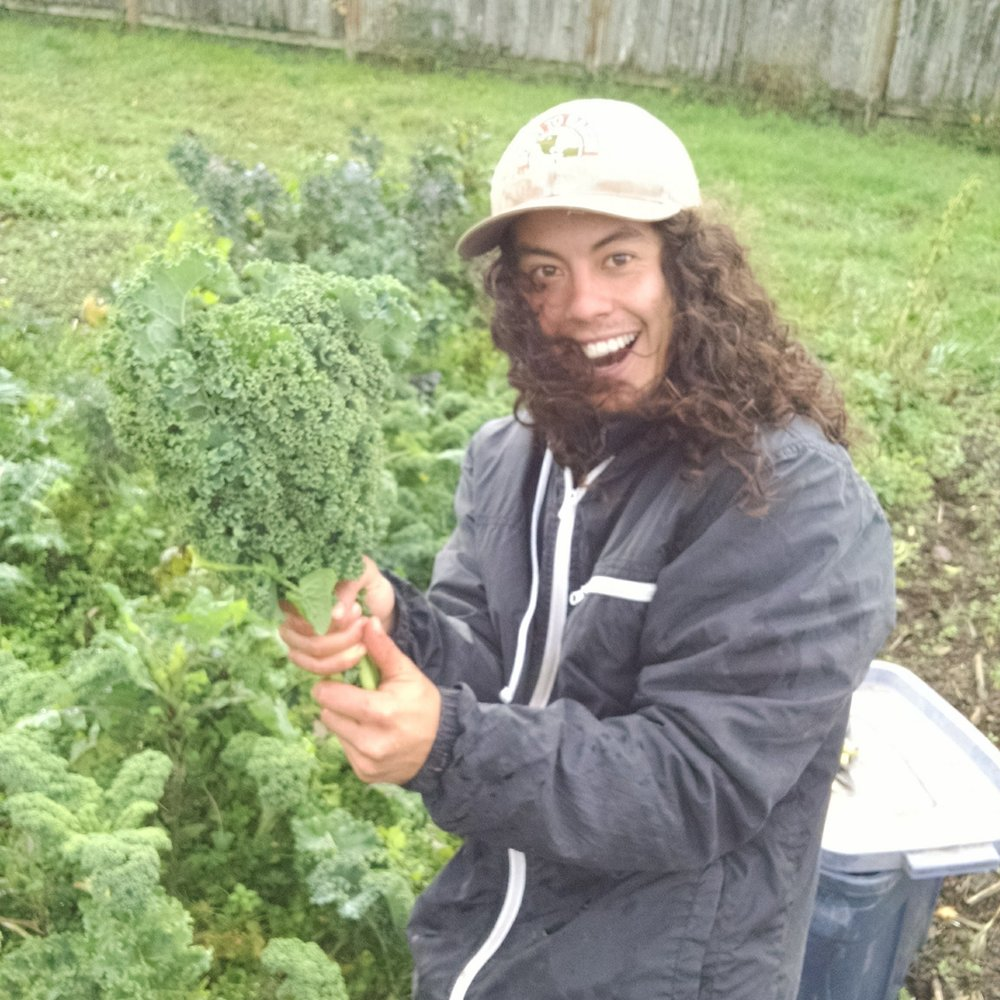 Michael harvesting kale last fall