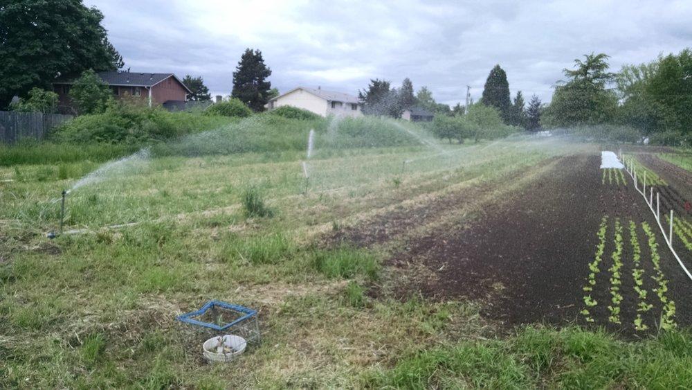 Joy is seeing water spray evenly from every last sprinkler head
