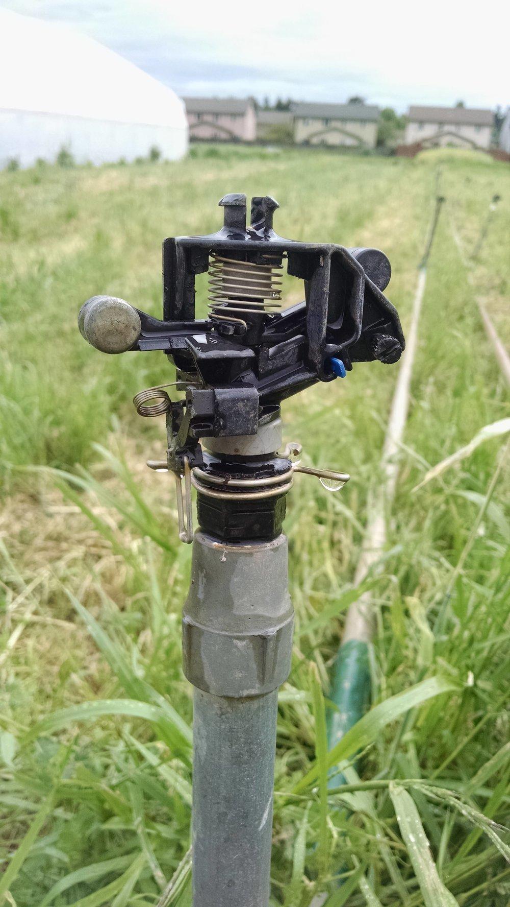 Sprinkler head, post-inspection, pre-testing under water pressure