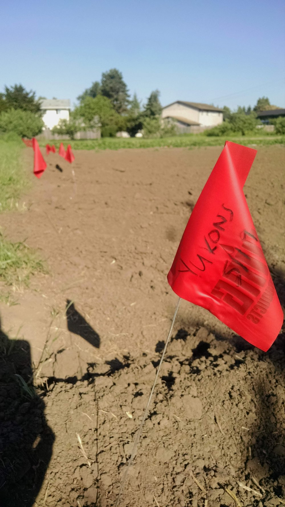 A cavalcade of red flags to mark the potato field, planted on Saturday by the new youth farmers