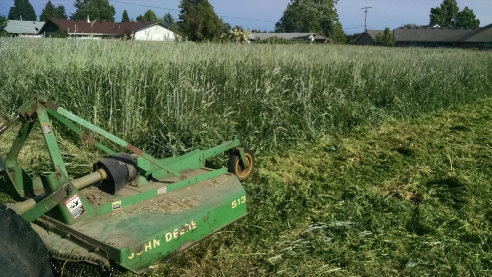 Cover crop getting chopped down, smelling strongly of field peas