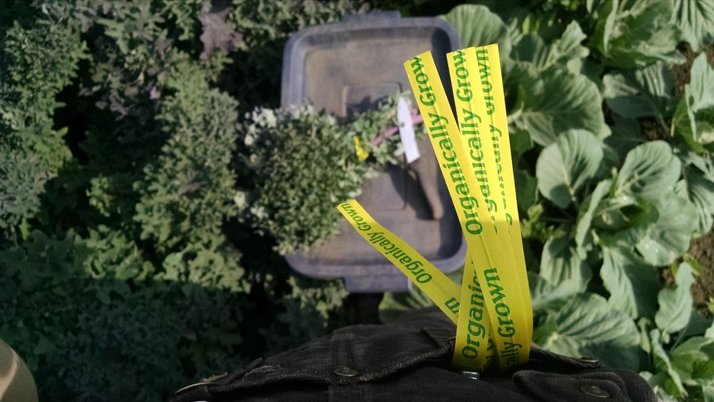 Kale harvesting tools