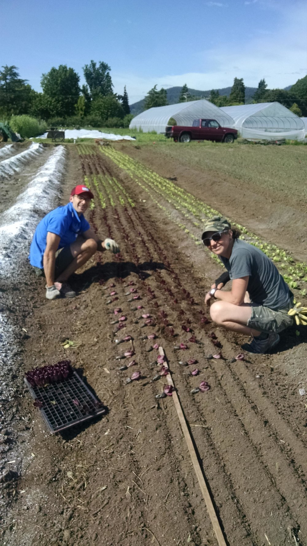 Aiden and Sherman planting salad mix lettuce