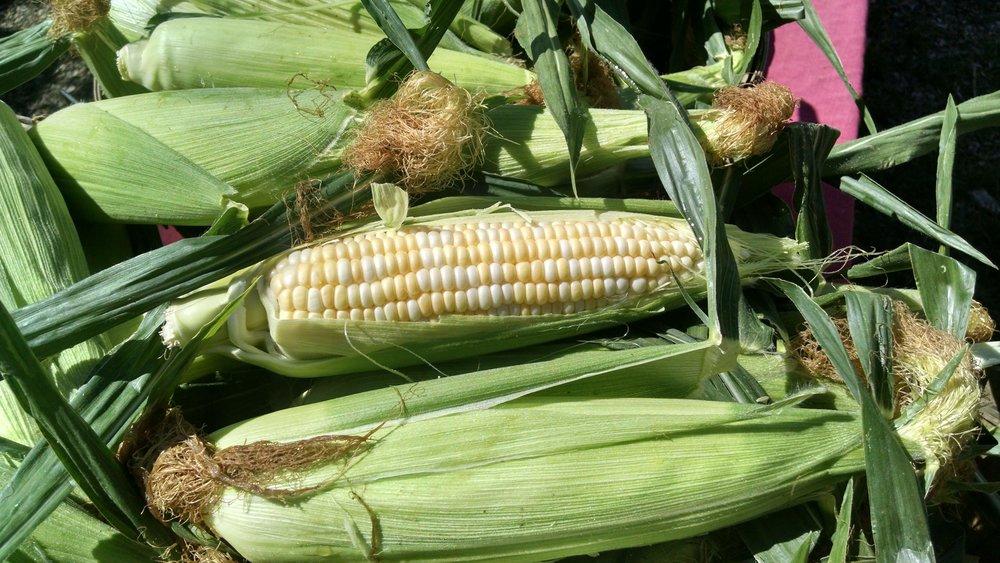 """Delectable"" corn"