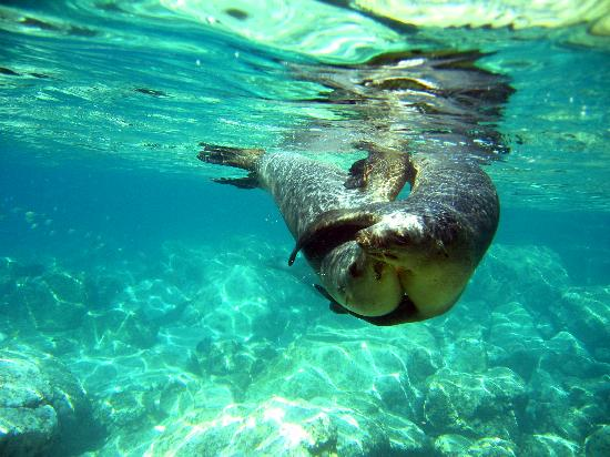 snorkeling-with-sea-lions.jpg