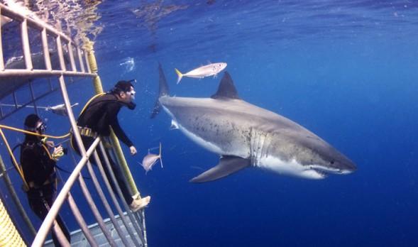 shark-5L-589x348.jpg