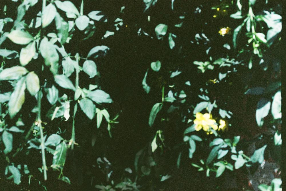 ANNA SAUZA-6.jpg