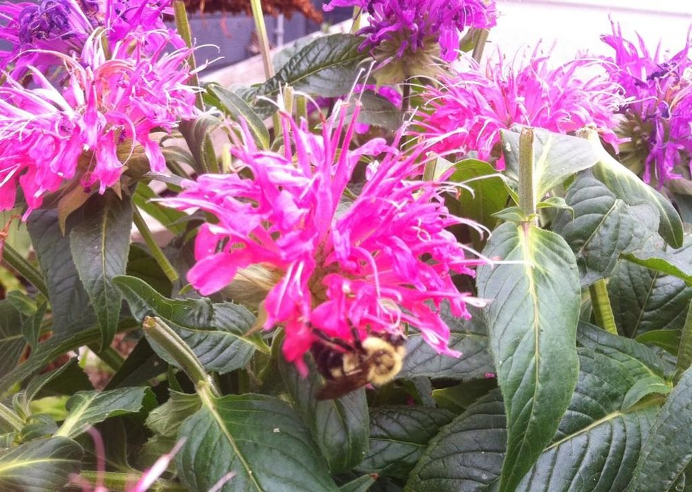 pollinator-p04.jpg