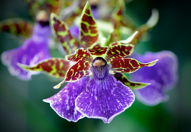 ep orchid.jpg