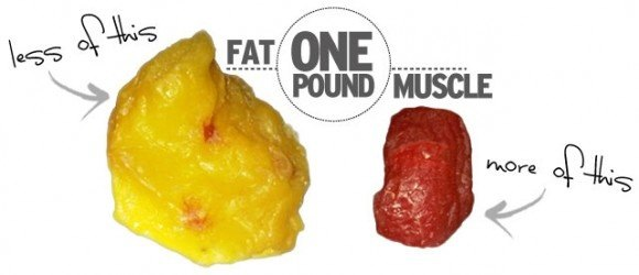 body fat vs muscle.png