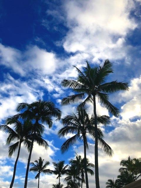 Palm Tree Sway!