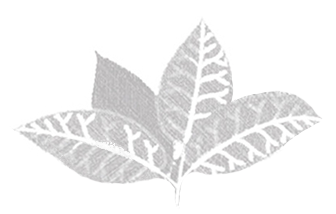 lemon myrtle leaves.png