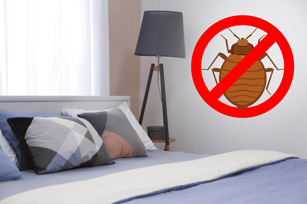 The Benefits of Freezing Bed Bugs Manhattan NY