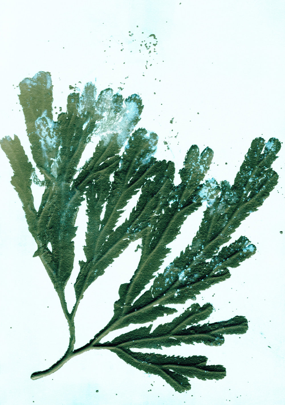 _A5.seaweed1.seagreen.jpg