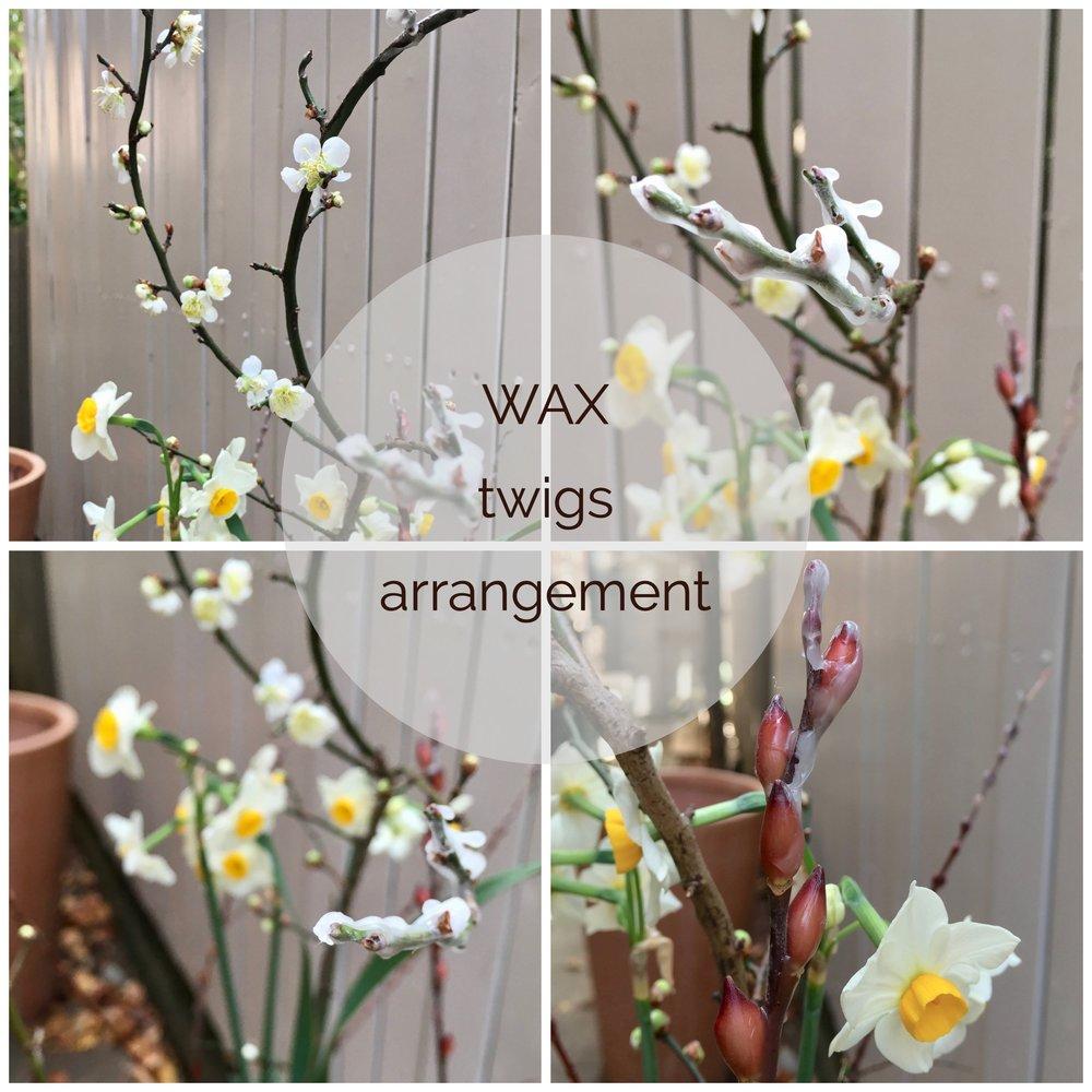 Wax twigs arrangement.jpg