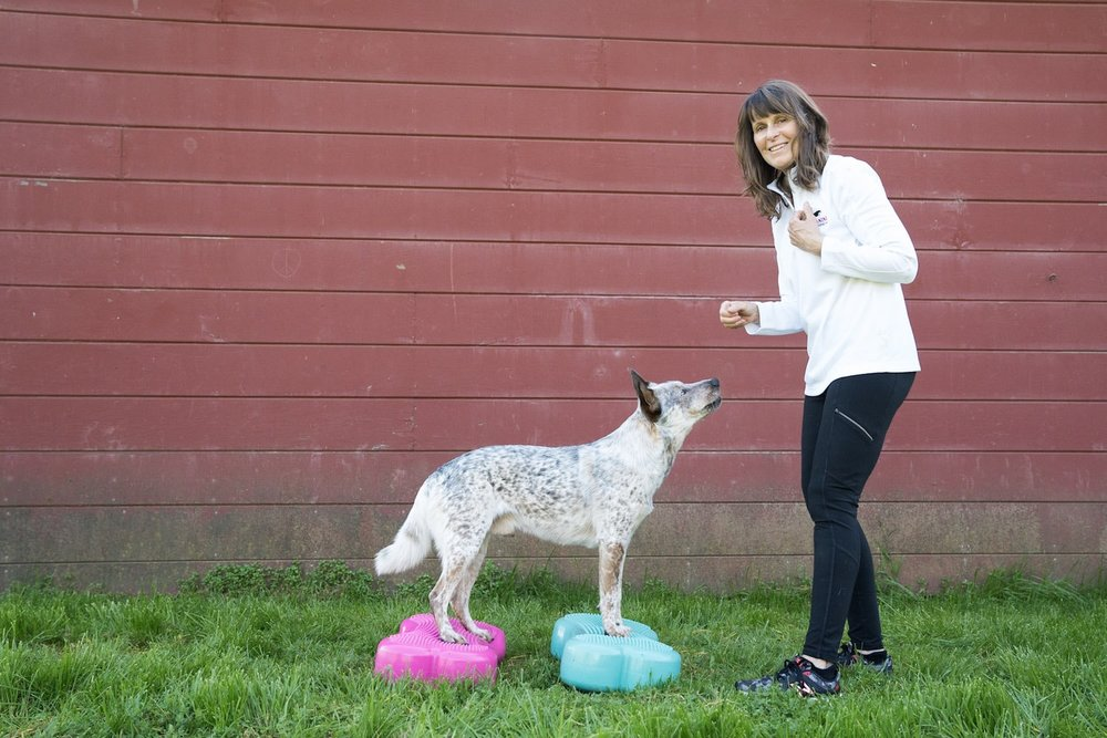 Group Dog Training Classes - Whether you have a canine athlete or a family dog, group classes are the effective, affordable way to improve your dog's overall fitness, flexibility and strength in a fun, friendly and supportive environment.