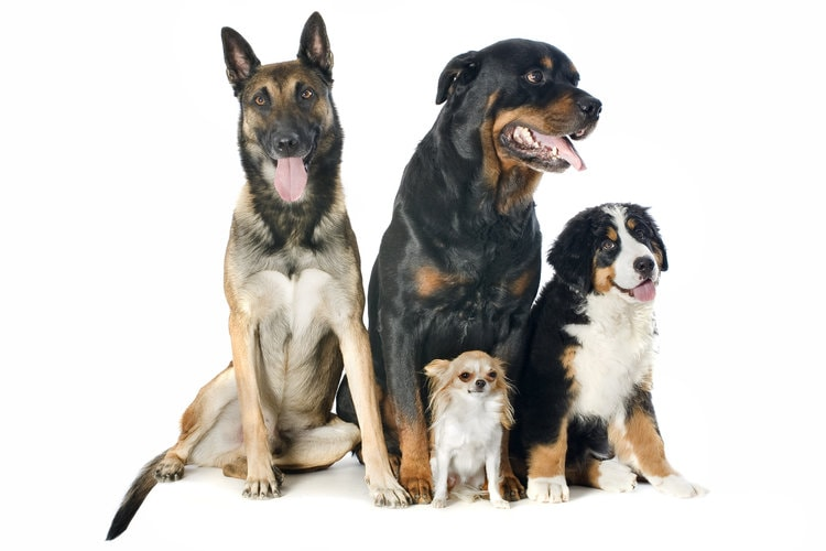 group dog training classes in san jose