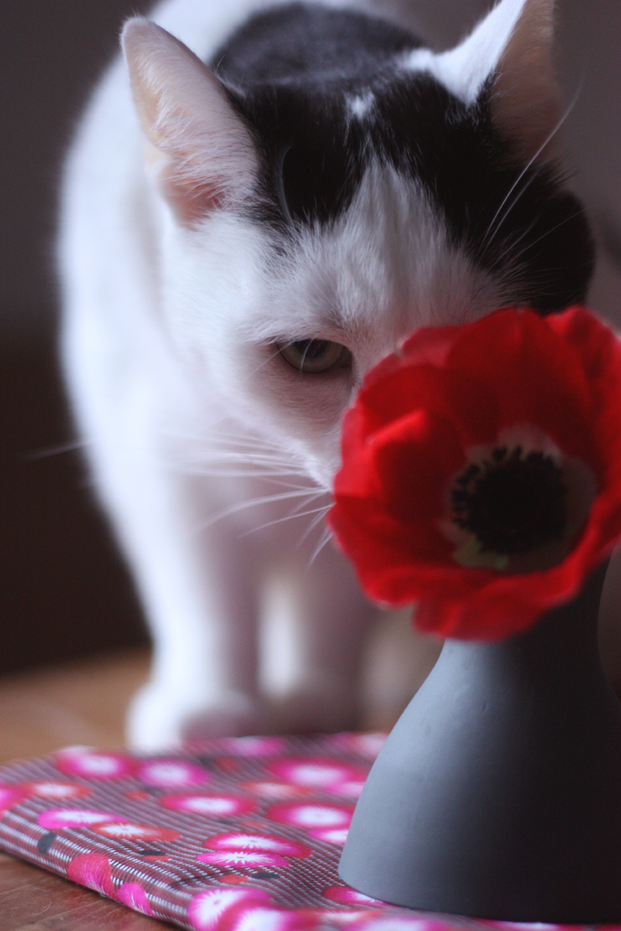 Hidden cat behind the red flowers by madame love