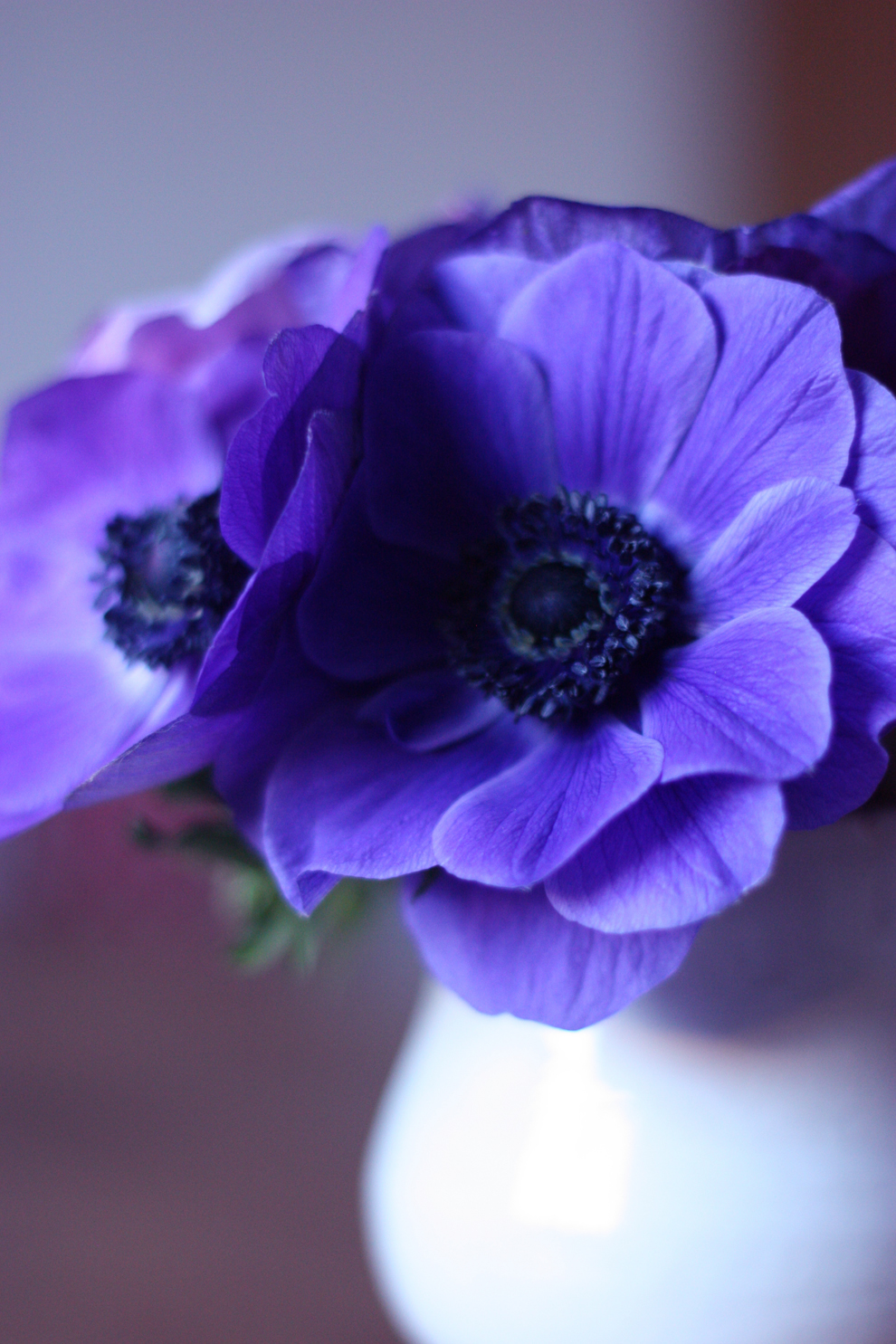delicate-still-life-with-blue-anemones-by-madame-love