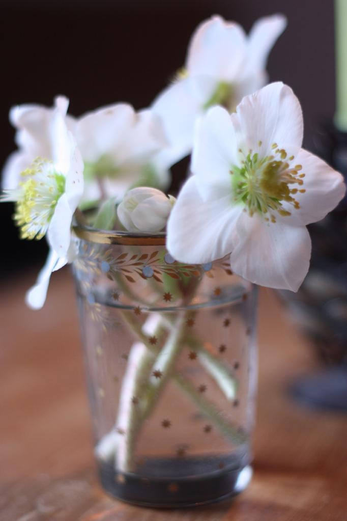 roses-de-noel-by-madamelove-Post-aus-meiner-küche