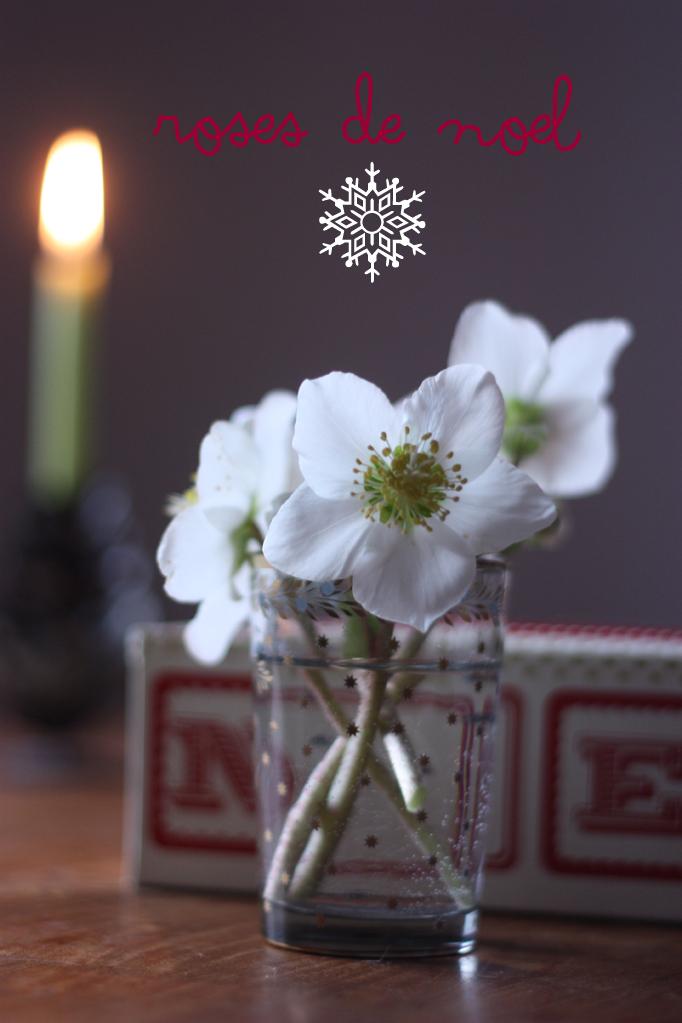 roses-de-noel-for-PAMK