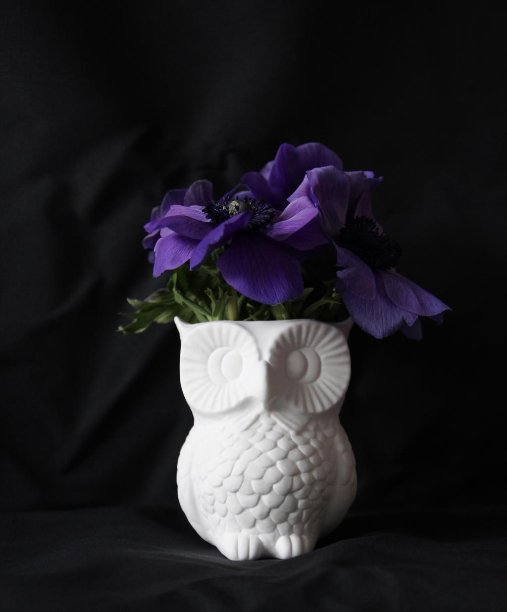 owl on a dark fabric
