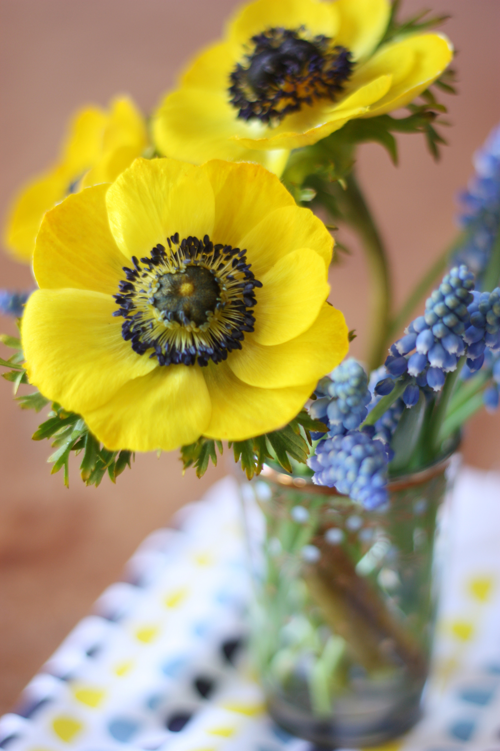 Yellow_and_blue_flowers_by_madame_love