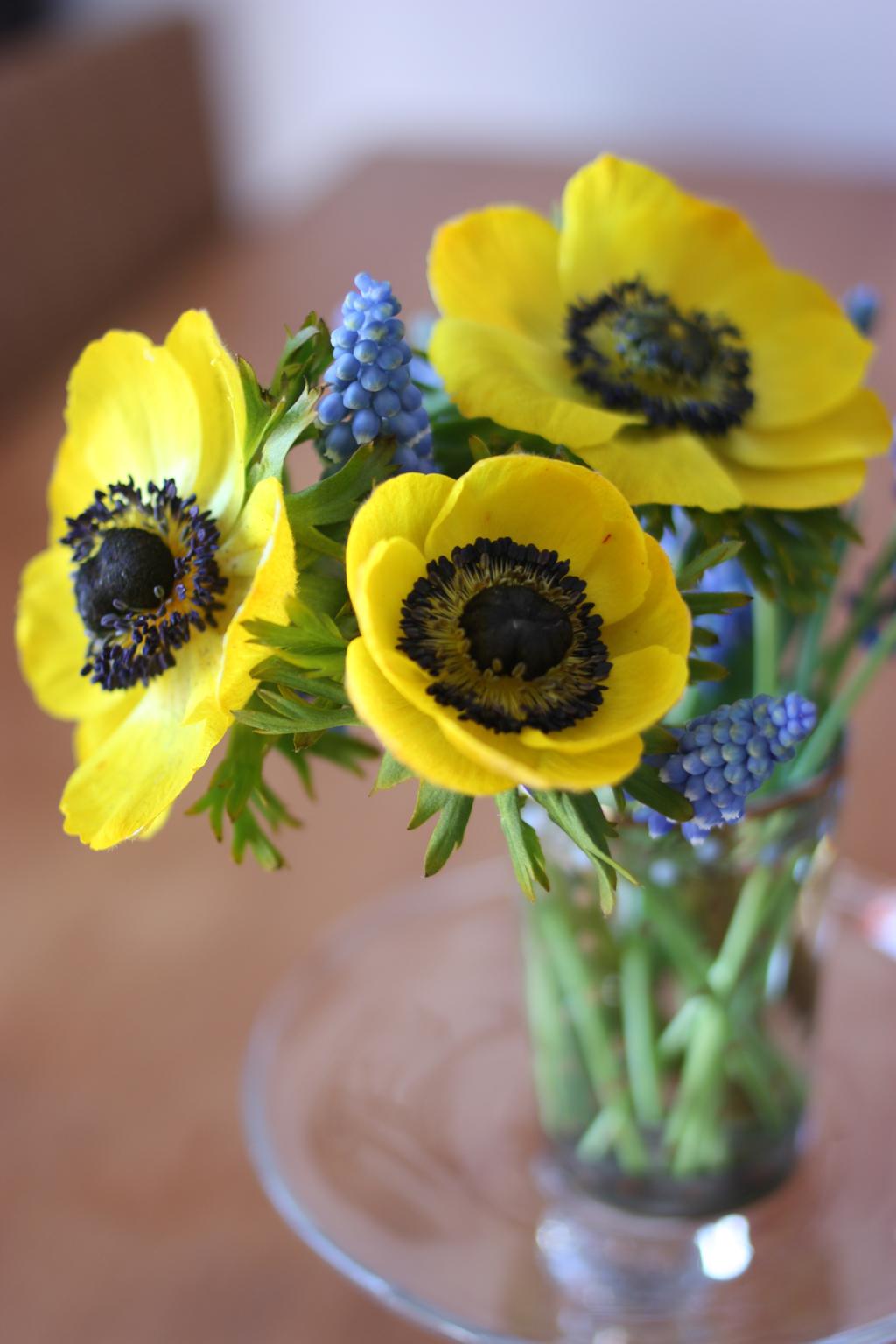 yellow_anemones