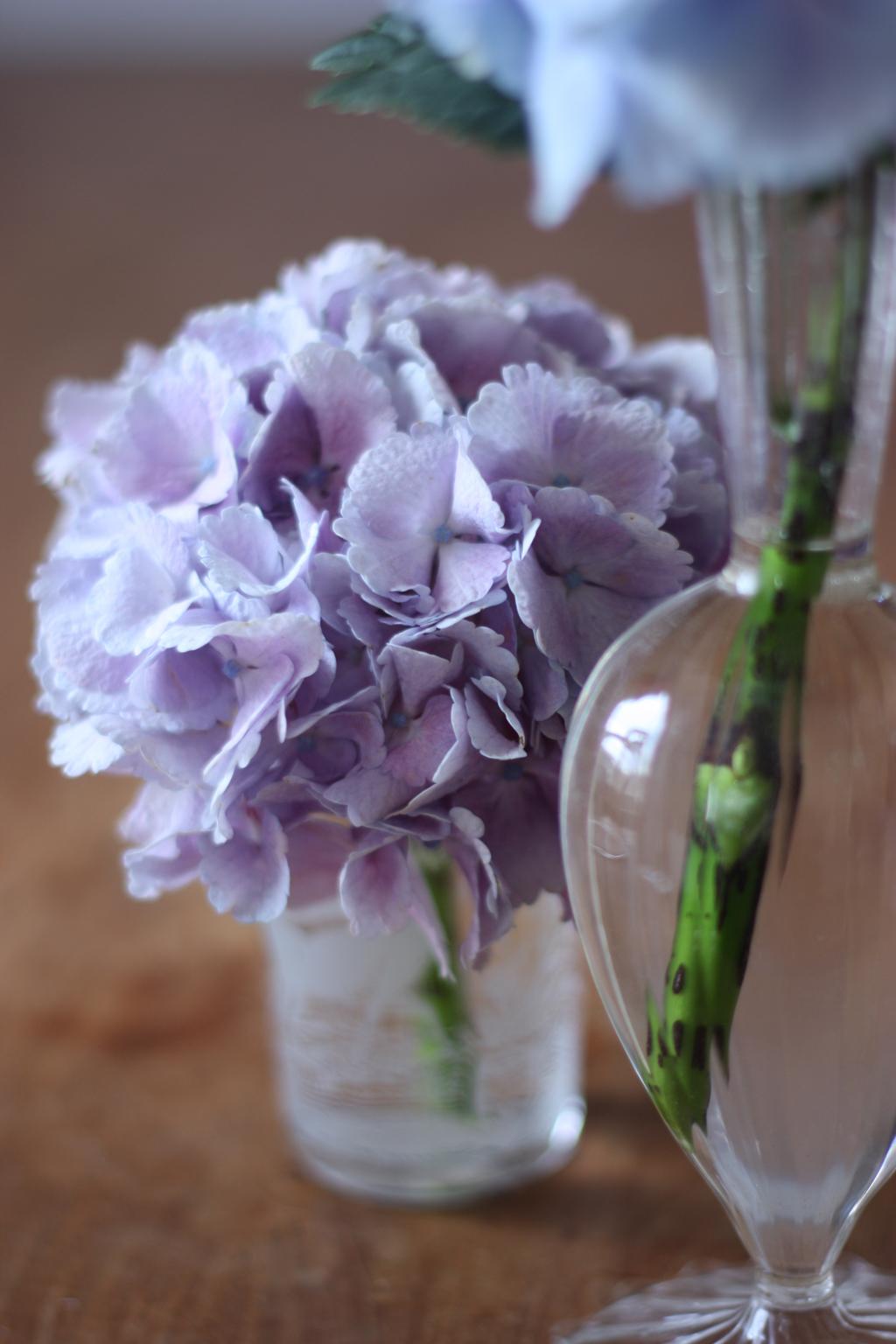 2flowergirls-hortensia-5