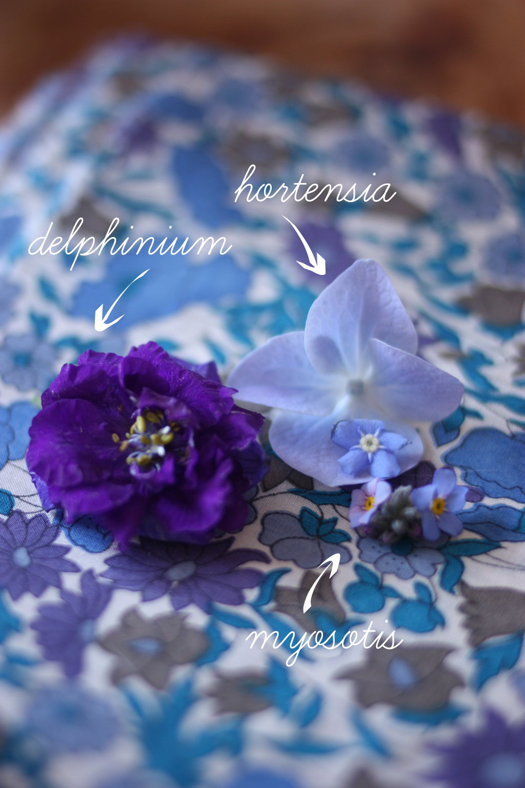 blue_variation_by_madame_love_the_flowers