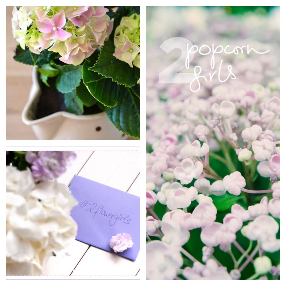 2flowergirls_review_hortensia_2