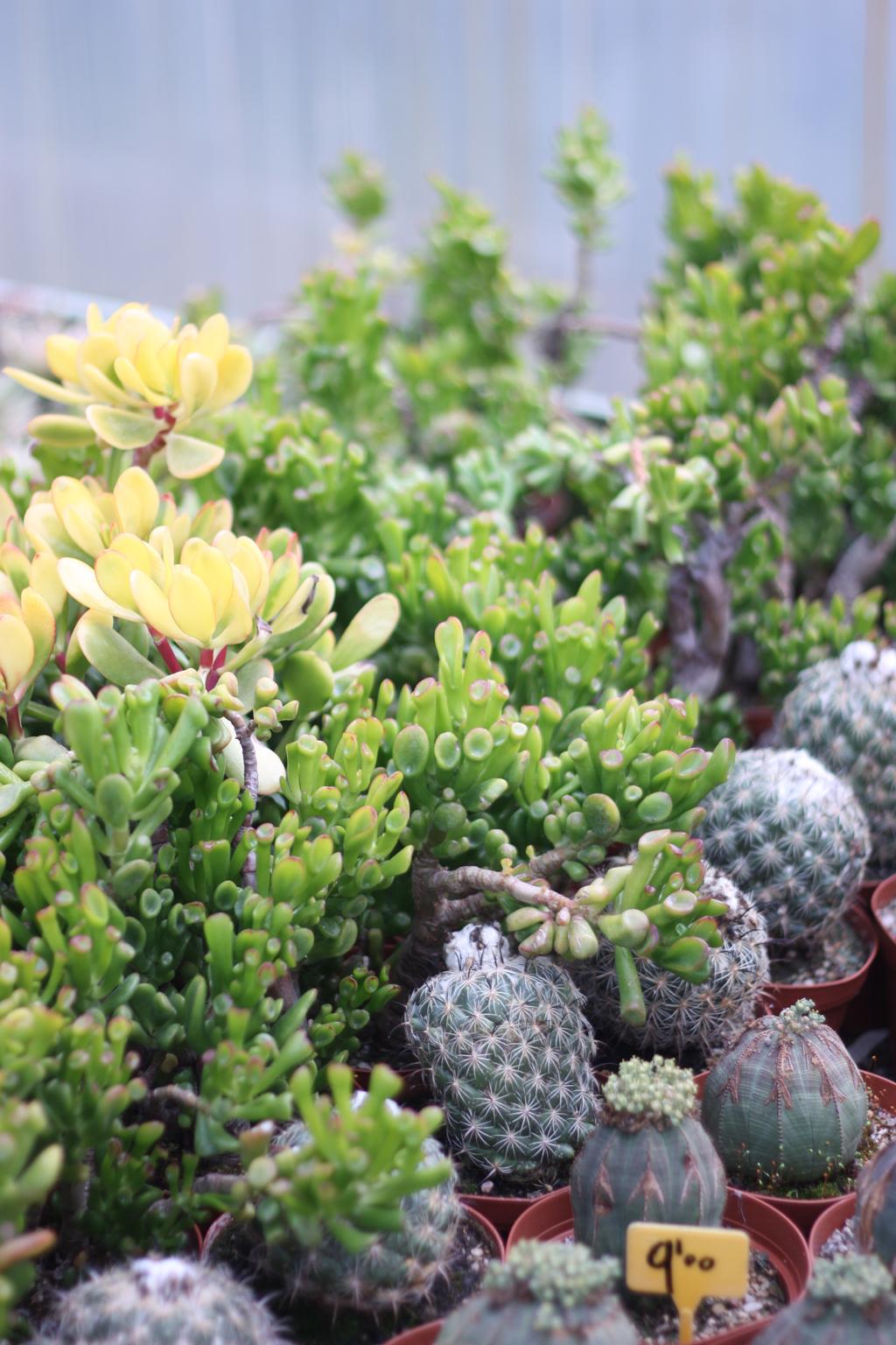cactus_farm_11