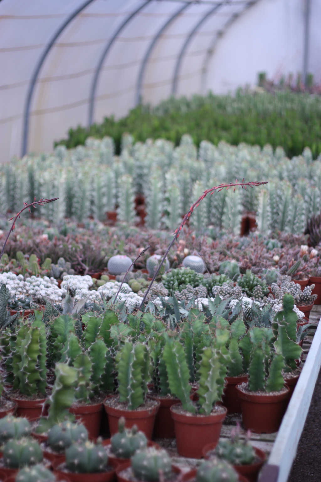 cactus_farm_12