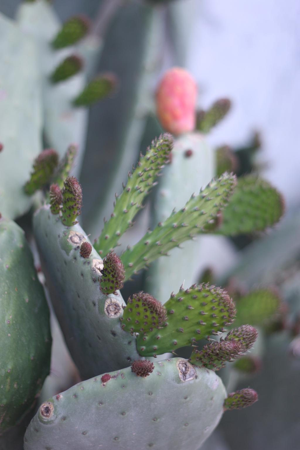 cactus_farm_13