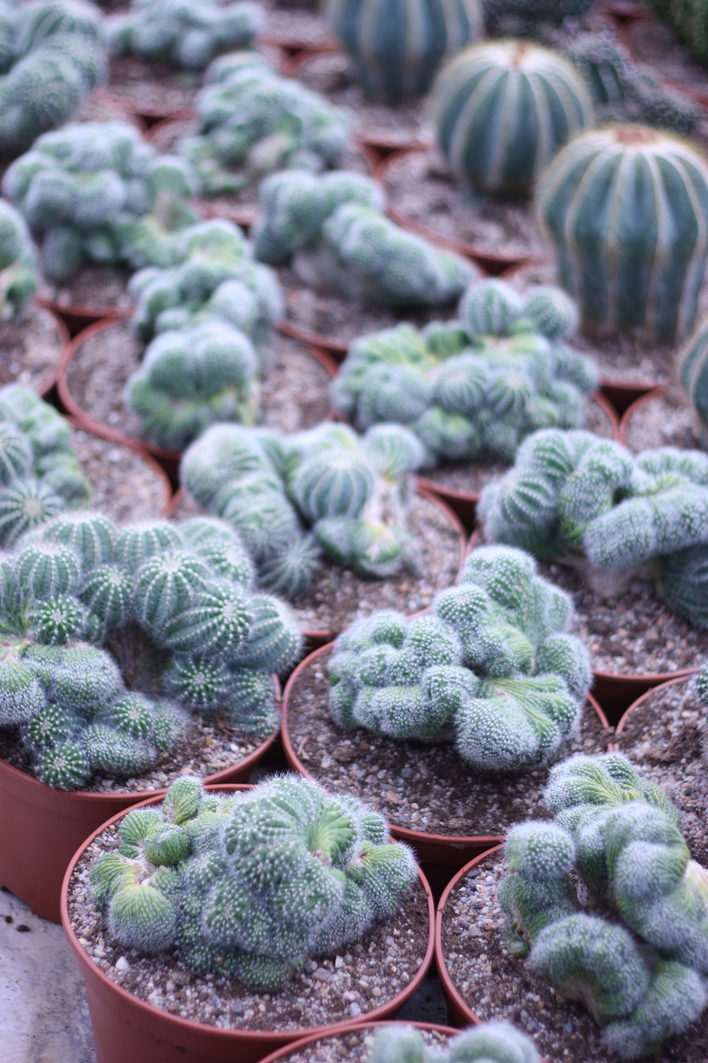 cactus_farm_7