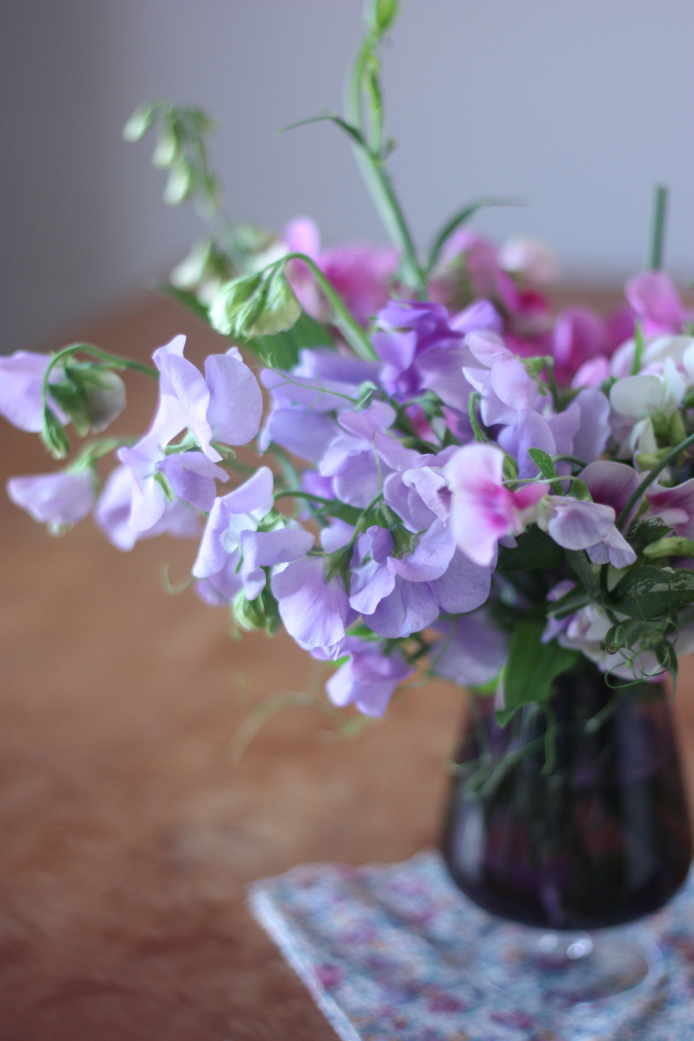 purple_sweet_peas_1