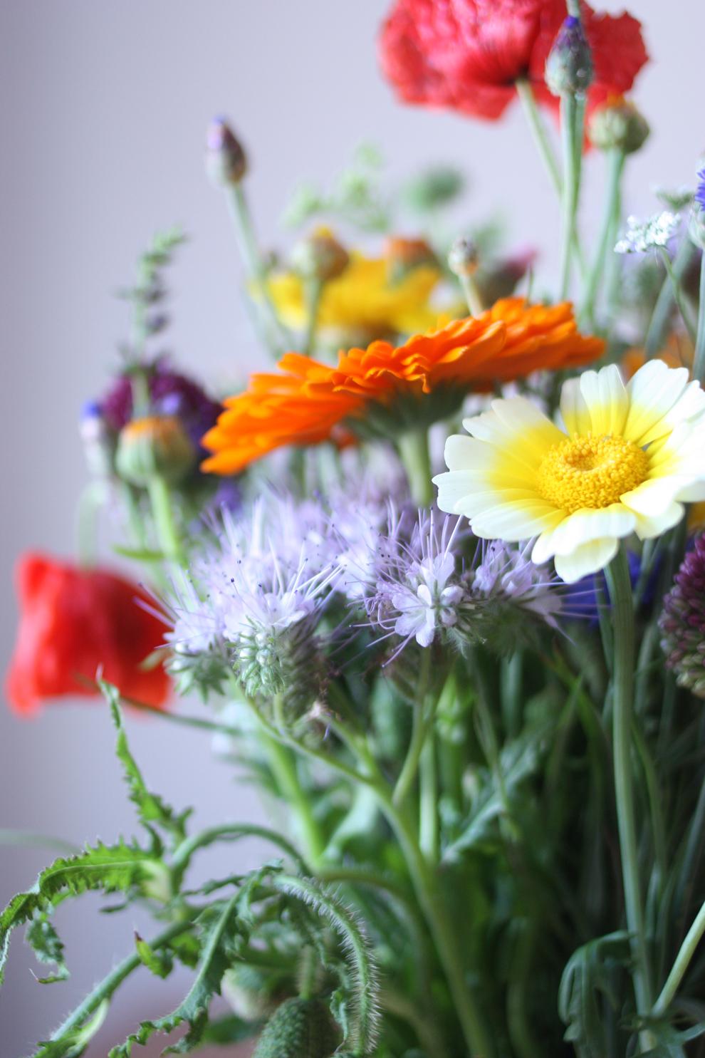 summer_flower_8